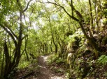 Hiking trail in La Gomera's national park