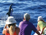 Observing dolphins and whales with OCEANO Whale Watching La Gomera