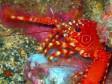 Sea life at the diving spots of La Gomera